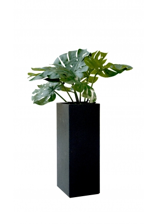 BASALT/MONSTERA