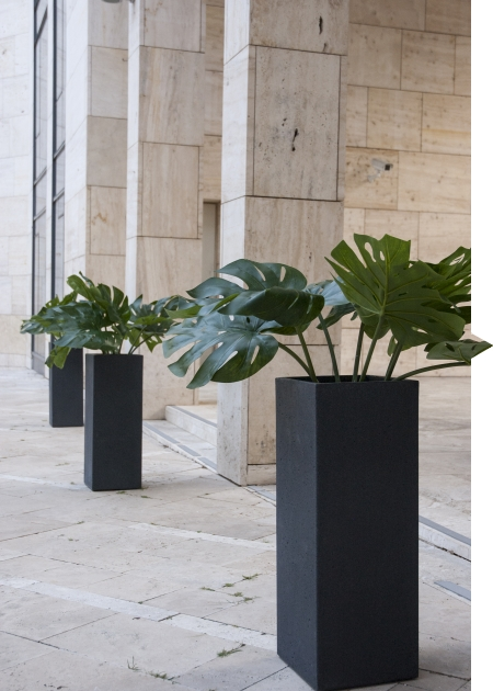 Basalt monstera
